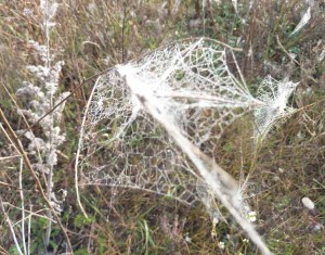 SpiderWebs1