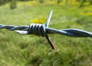 Barbed wire up close. Ouch!
