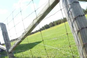 Page wire fence