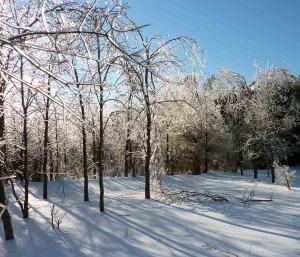 Two years ago this time, griped by a great ice storm.