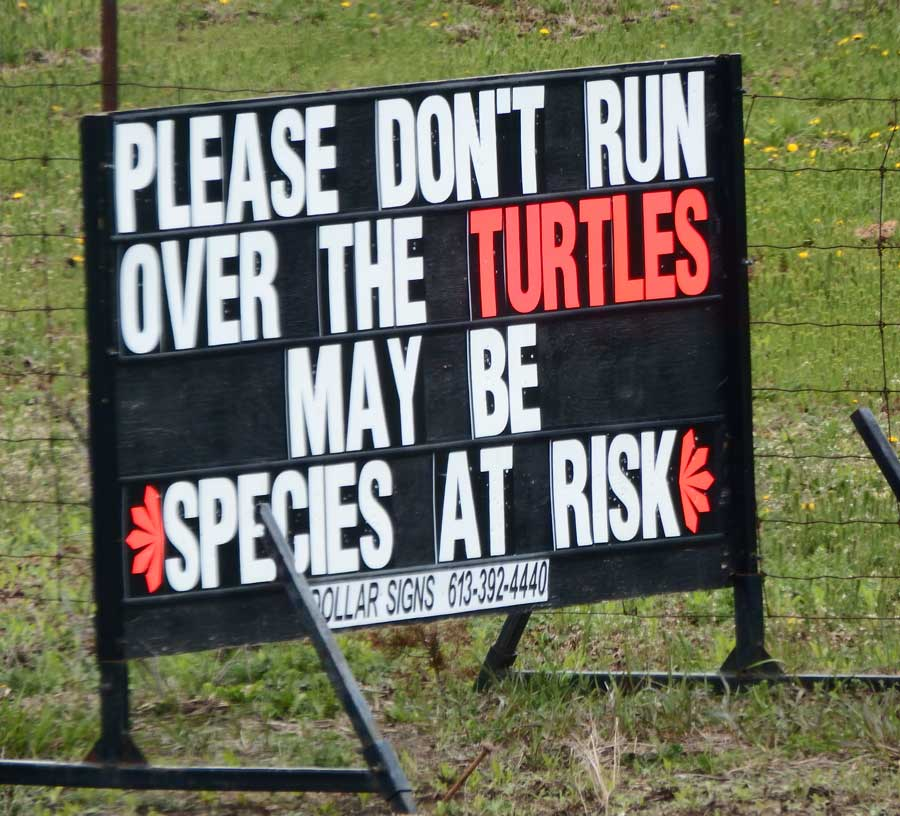 Slow Turtles Vs Fast, Mean Vandals