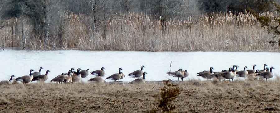 Ice Retreats, Spring Edges In